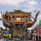 Дома на деревьях и участке своими руками