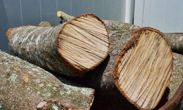деревянные садовые дорожки из спилов своими руками фото инструкция