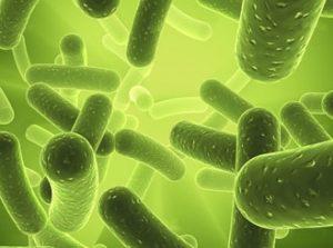 вирусы в воде из скважины бактерии микроорганизмы