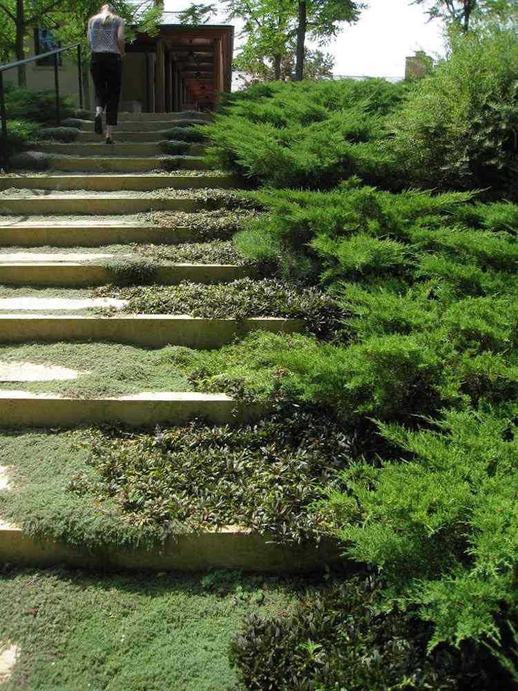 идея садовой лестницы своими руками из бетона мох