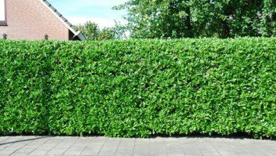 Из чего и как сделать живую изгородь на даче