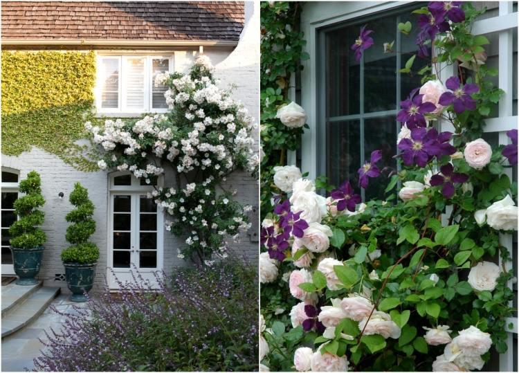 Белые плетистые розы фото