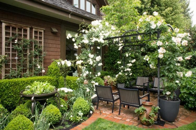 Белые плетистые розы на металлической перголе