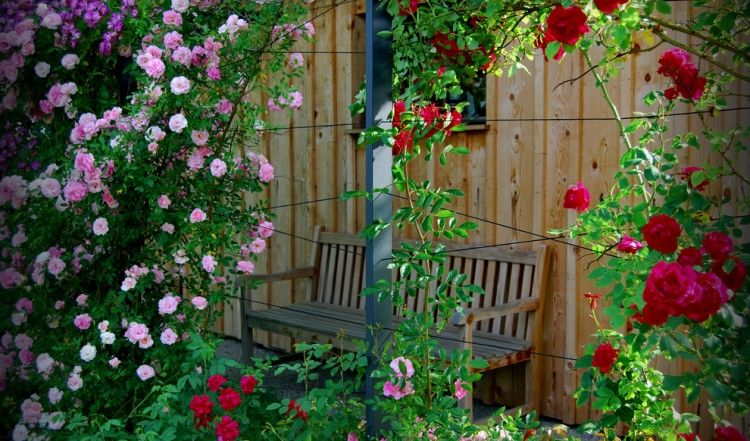 Опора для плетистых роз фото