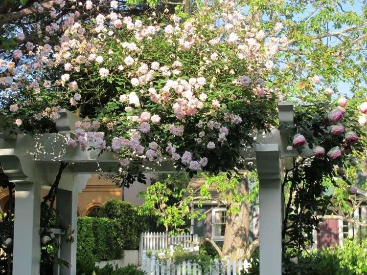 Розовые плетистые розы в качестве украшения для ворот