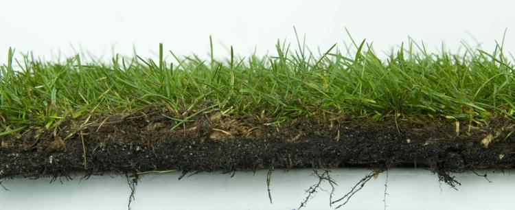 рулонный газон технология фото в разрезе