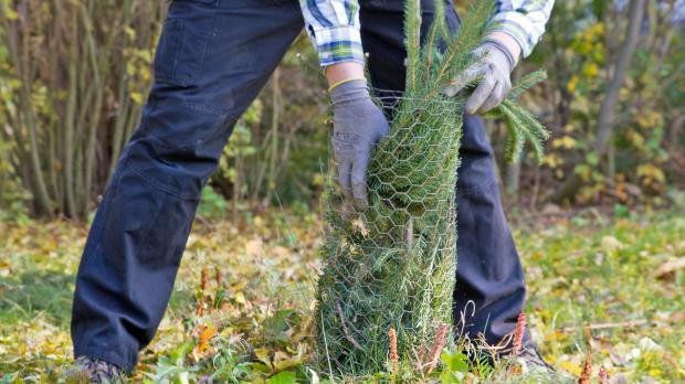 подготовка растений к зиме фото9