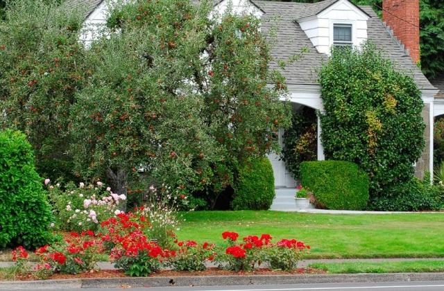 необычныые деревья для украшения сада